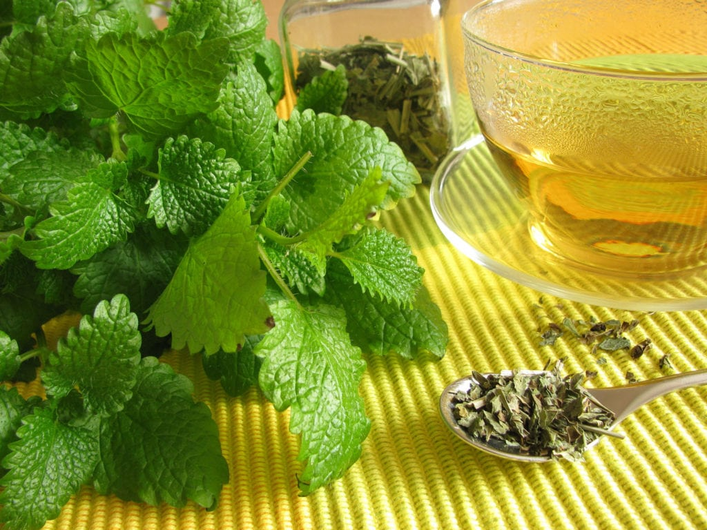 lemon balm for cold sores